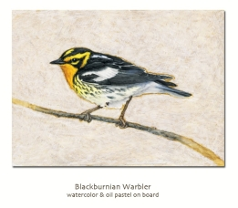 blackburnianwarbler
