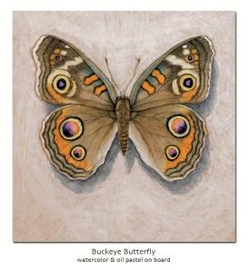 buckeyebutterfly