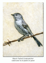 gnatcatcher