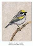 golden-wingedwarbler