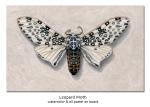 leopardmoth