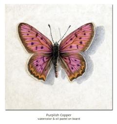 purplishcopper