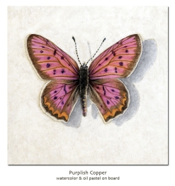 purplishcopper