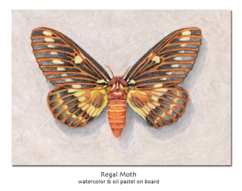 regalmoth